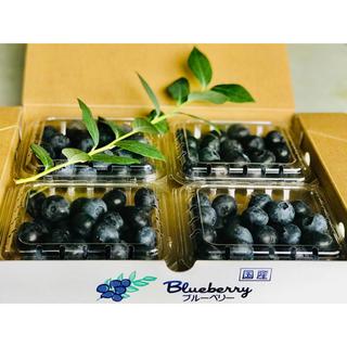 【朝摘み】厳選大粒ブルーベリー4種詰合 (生食用) 600g(フルーツ)