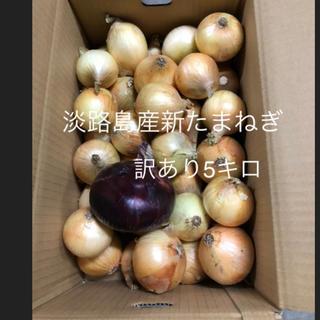 淡路島 新たまねぎ 訳あり 10キロ(野菜)