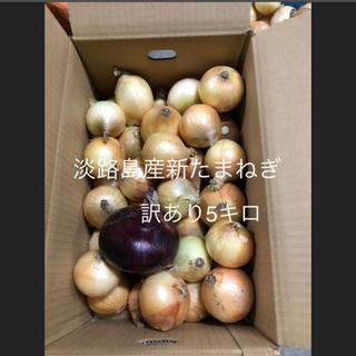 淡路島 新たまねぎ 訳あり 5キロ(野菜)