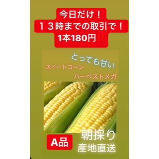 今日だけ1本180円‼️‼️‼️バラ売り!送料別とうもろこし スイートコーン(野菜)
