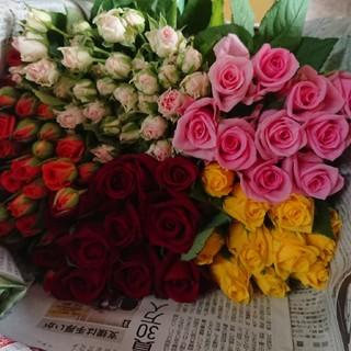 バラ 50本ミックス♪②生花・切り花(その他)
