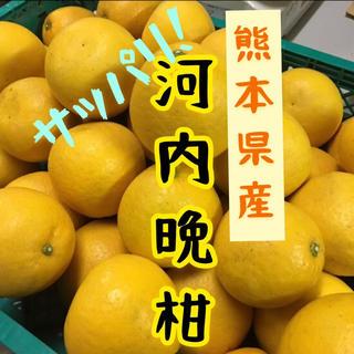 熊本県産 河内晩柑 10kg(フルーツ)