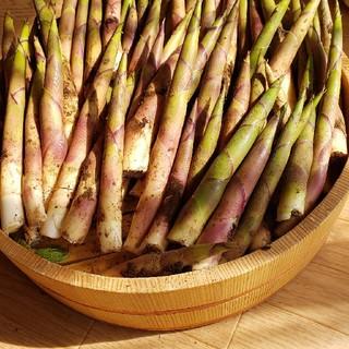 山形庄内鳥海山麓 天然根曲竹(15~35個)約500g山菜、細竹 姫竹 月山竹(野菜)