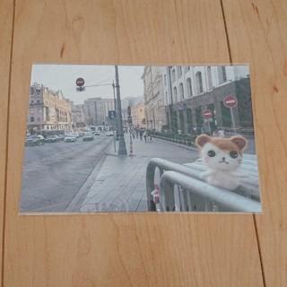 【未開封】ハム太郎カフェ限定ポストカード(写真/ポストカード)