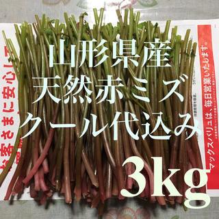 クール代込み  山形県産 天然赤ミズ 3kg  増量可能 山菜  ウワバミソウ(野菜)