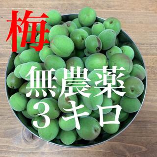 3キロ無農薬 群馬県産 生梅 送料込!梅酒 梅ジュース 梅シロップ(フルーツ)