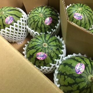 食べやすい美味しい♪熊本小玉すいか 3~6玉入り☆ひとりじめ☆8キロ(フルーツ)