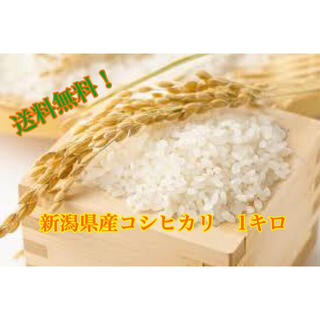 新潟県産コシヒカリ玄米 1キロ(米/穀物)