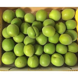 ☆取れたて  梅 1.2kg 完全無農薬 無化学肥料(フルーツ)