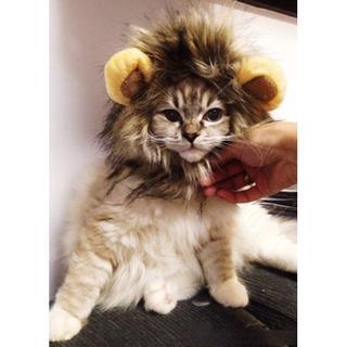猫用 被り物 帽子 たてがみ ブラウン(猫)