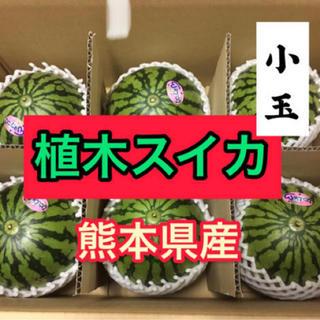 熊本県産 小玉すいか 8k(フルーツ)