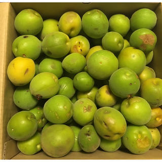 ☆ 梅 4.1kg 完全無農薬 無化学肥料(フルーツ)