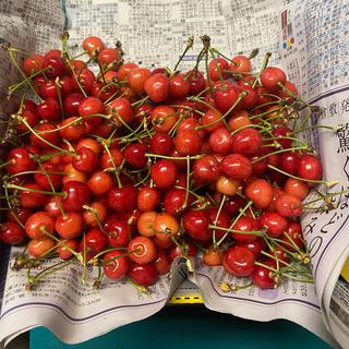 山形県 東根産 さくらんぼ 紅さやか 800g(フルーツ)