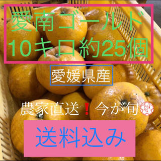 愛媛県産 みかん 農家直送 愛南ゴールド(河内晩柑)(フルーツ)