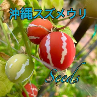 沖縄すずめうりの種20粒&ブラウンコットン(その他)