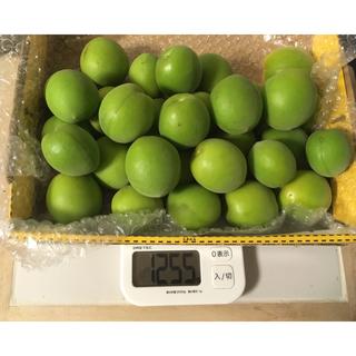 ☆取れたて  梅 1.2kg 完全無農薬 無化学肥料(野菜)