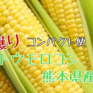数量限定 とうもろこし(熊本産)5本(野菜)