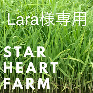 【Lara様専用】お取り置き分(米/穀物)