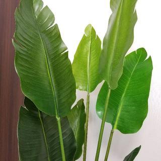 フェイクグリーン 人工観葉植物 トラベラーズパーム 高さ140cm(置物)