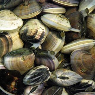 ゆう様専用 食べ比べ 小玉貝1キロ はまぐり1キロ(魚介)