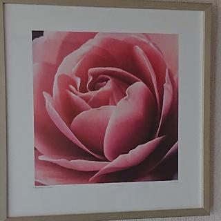 Pink Rose ポスター シルバーフレーム付(ポスターフレーム)