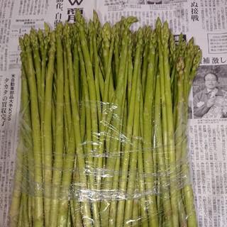 限定増量!佐賀県産グリーンアスパラ1.5キロ(野菜)