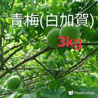 青梅(白加賀) 3kg(最終)(フルーツ)