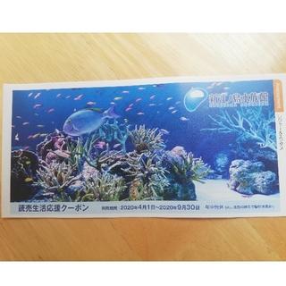 匿名配送 新江ノ島水族館 割引券(水族館)