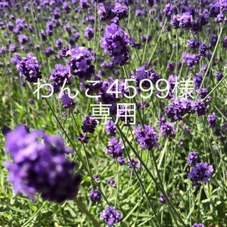 motherways - マザウェイズ 21cm クロックス風 サンダル 紫 キッズ