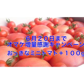 20日までオマケ増量❗️大人気の訳ありソムリエトマト5kg(20玉〜35玉)(野菜)