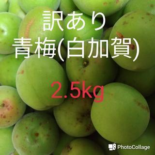 訳あり青梅(白加賀) 2.5㎏ 最終(6/8日15時まで)(フルーツ)