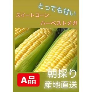 とうもろこし☆今年最後です(^o^)(野菜)