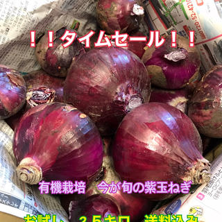 タイムセール!今が旬紫玉ねぎ 2.5キロ 送料込み(野菜)