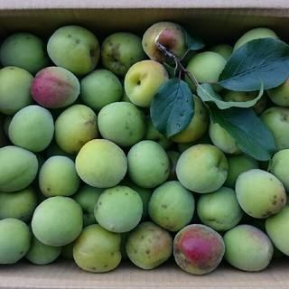 【ふゆ様専用】高知産南高梅 4kg 【新鮮な梅をお送りします】(フルーツ)
