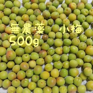 無農薬 小梅 500g(フルーツ)
