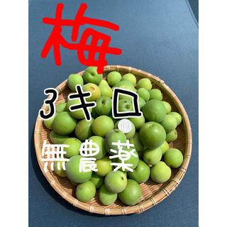 3キロ無農薬B品 群馬県産 生梅 送料込!梅酒 梅ジュース 梅シロップ(フルーツ)