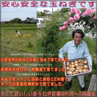 売り切れました☆無農薬野菜 有機肥料で作る安心安全な白里海岸の新玉ねぎ 5kg☆(野菜)