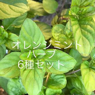 無農薬ハーブ6種セット(その他)