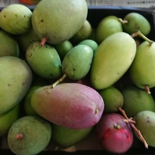 7. グリーンマンゴー 3kg(フルーツ)