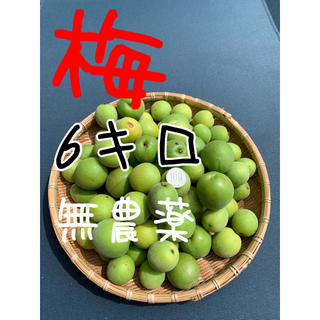 6キロ無農薬B品 群馬県産 生梅 送料込!梅酒 梅ジュース 梅シロップ(フルーツ)