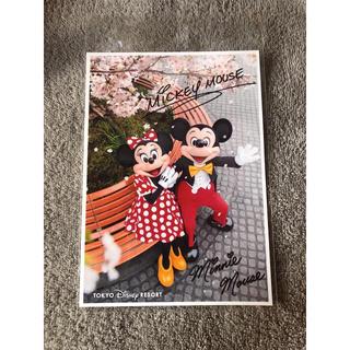 ディズニー(Disney)のミッキー ミニー 写真(写真)