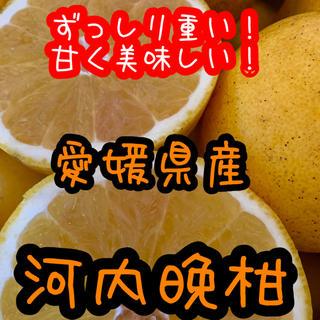 河内晩柑(フルーツ)