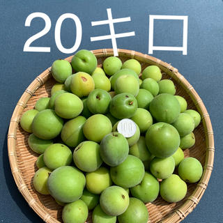 20キロyonsa様専用!無農薬B品 群馬県産 生梅 梅酒梅ジュース 梅シロップ(フルーツ)