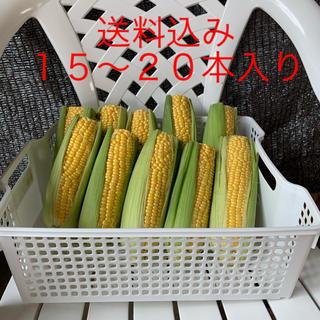 トウモロコシ 15〜20本入(野菜)
