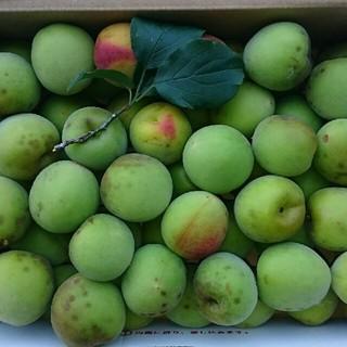 高知産南高梅(小玉,M~L級) 3kg 【新鮮な梅をお送りします】(フルーツ)