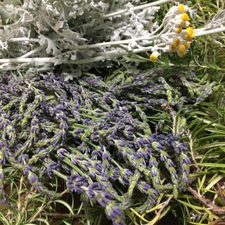 香り立つ無農薬ドライフラワー ローズマリー ダースティーミラー ラベンダー(ドライフラワー)