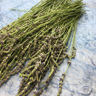 香り立つ無農薬ドライフラワー 出来たて 香りの最高峰ラベンダー(グロッソ)(ドライフラワー)