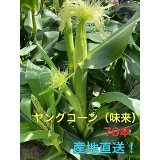 ヤングコーン 5kg(野菜)