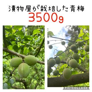 青梅 白加賀 3.5kg(フルーツ)