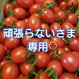 4㎏ 頑張らないさま専用です☺️ ミニトマト(野菜)